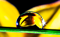 Garden Reflections in a Drop of Dew garden light #9220 LED10